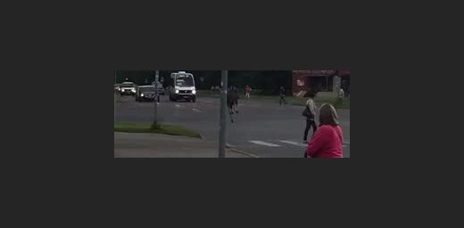 ФОТО, ВИДЕО ОЧЕВИДЦЕВ: На улице Илукстес по проезжей части бегает лось
