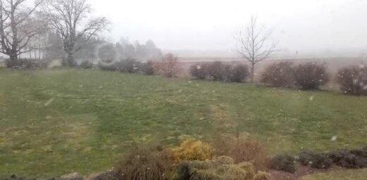 Video: Pie Valmieras un Cēsīs iedzīvotājus pārsteidz cīruļputenis