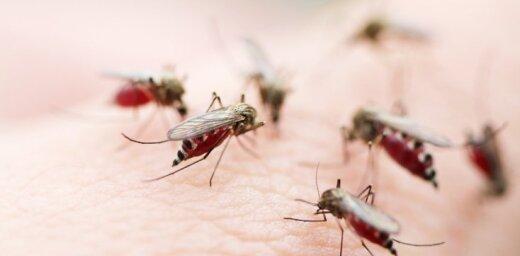 Прославившая якутские морозы россиянка повторила успех с комарами