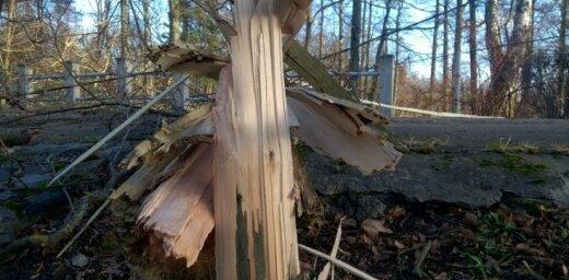Foto: Nogāzti koki un krītošs apmetums – stiprā vēja radītie postījumi Latvijā