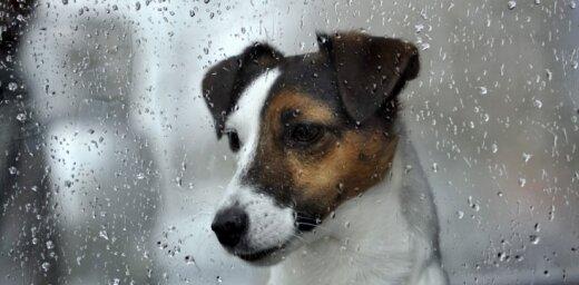 Trešdien joprojām būs lietains laiks