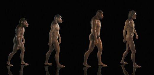 evolūcija