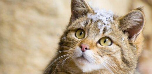 Чем заняться в выходные: говорящий кот, солнцеворот и Бах без слов