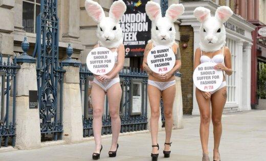 PETA zaķīši iestājas pret zaķu slepkavošanu