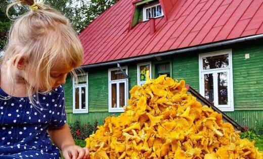 Lasītāju foto: parādi lielo sēņu 'lomu' un saņem balvu!