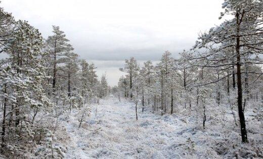 Stalbē notiks šogad pirmais 'Meža dienu' pasākums