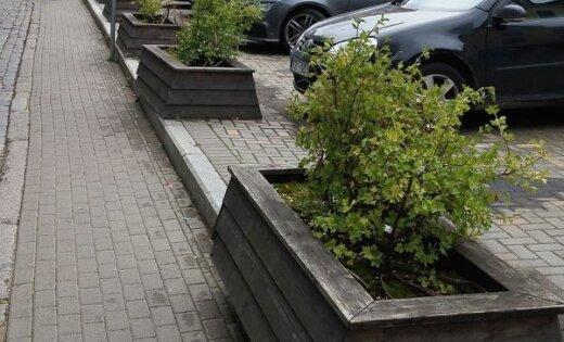 Foto: 'Kapi Rīgas centrā' – lasītājs sašutis par puķupodu izskatu