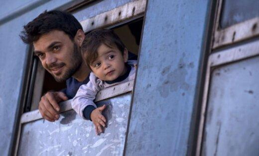 В Финляндии беженцев-мусульман поселили в центре свиноводства
