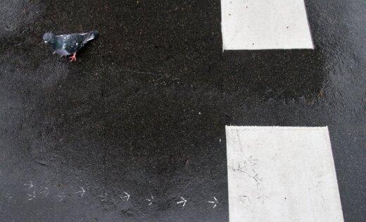 На проселочной дороге водитель насмерть сбил пешехода