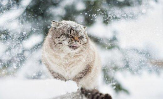 В конце недели ожидается снег