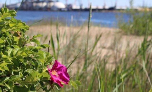 Foto: Dabas bagātība Daugavas un Buļļupes ūdeņos ieskautajā Mīlestības saliņā