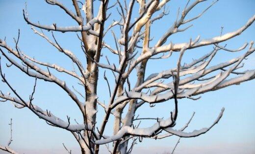 Sestdienas rītā valsts austrumos termometra stabiņš noslīdējis līdz -10 grādiem