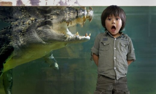Drosmīgs puisēns pozē krokodila rīkles priekšā