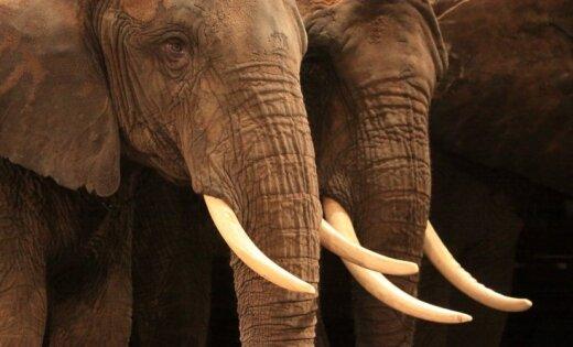 Минземледелия предложит запретить использование в цирке диких животных