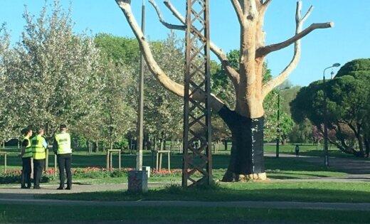 Foto: Uzvaras parkā koks ar latvju rakstu zīmēm ietīts melnā plēvē (plkst.14.42)