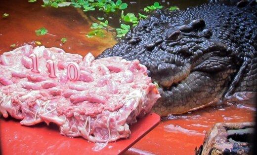 Milzīgākais krokodils svin jubileju