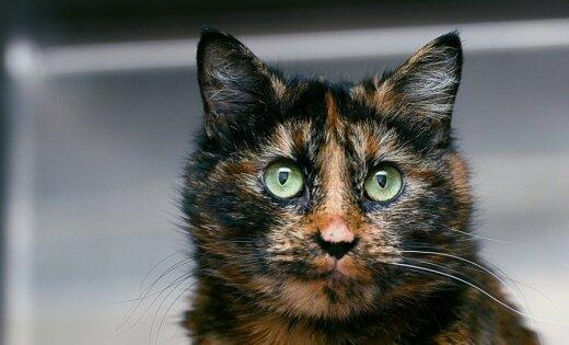 Ученые выяснили, как домашние коты обманывают хозяев