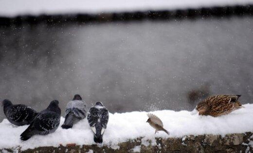 Daudzviet Vidzemē zemi klāj sniegs; sniegputenis sākas arī Latgalē