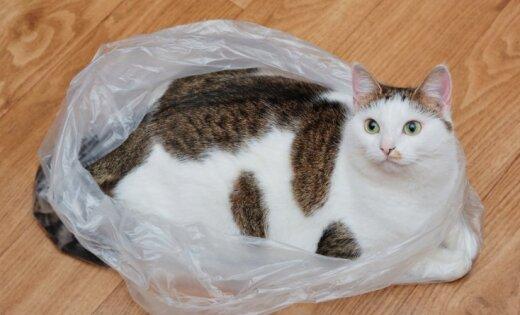 Жителей ЕС жестко заставят отказаться от пластиковых пакетов