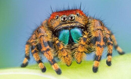 Пауки каждый год съедают 400-800 млн тонн насекомых— Ученые
