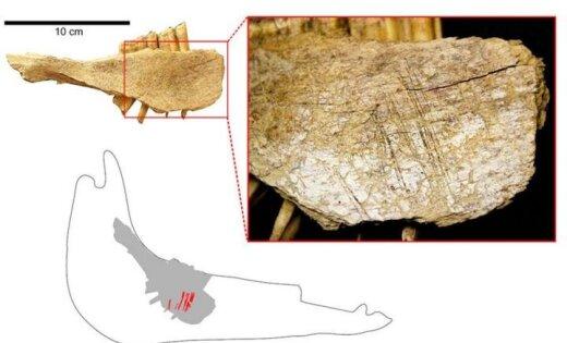 Ученые: Найдены самые древнейшие люди Америки
