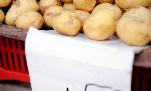 Asociācija: Latvijā agro kartupeļu cenas šogad nav pieaugušas