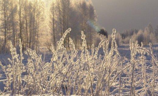 Фенолог: эта зима будет длиннее и холоднее предыдущей