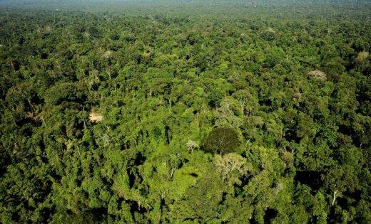 Семья изсоедененных штатов два дня пряталась в тропических зарослях Амазонки после нападения пиратов