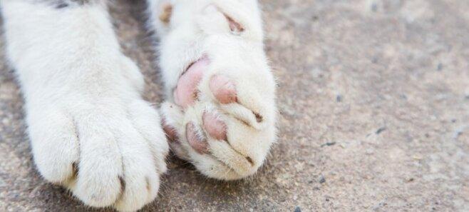 Шокирующие ФОТО уличных котов, которых могло бы и не быть — с вашей помощью