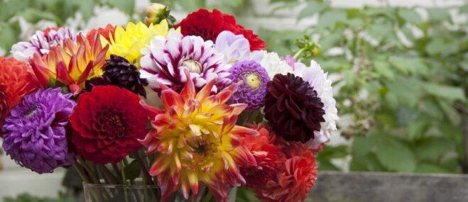 Iedvesma floristikas darbiem: idejas rudenīgiem dekoriem ar dārza puķēm