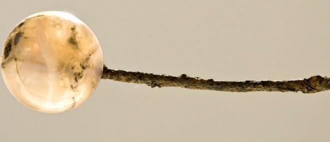 Rotājums ar vēsturi: stāsts par, iespējams, senāko eglītes rotājumu