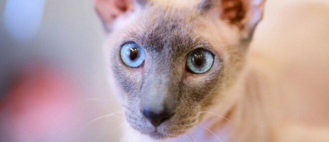 Gandrīz kaili un neparasti: pieci īpaši kaķīši, kas savaldzinās ikvienu