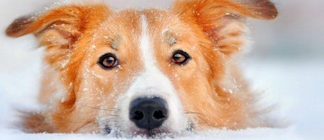 Kā pareizi rūpēties par mājas mīluli sniegā un aukstumā