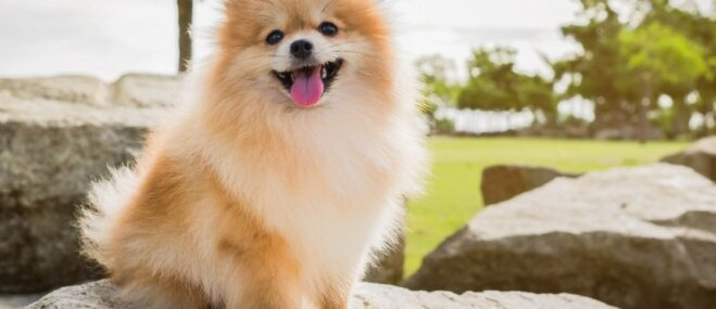 Foto: Desmit smaidīgākie suņuki, kas liks priecāties ik dienu