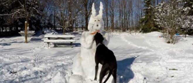 Video: Suņuks atņem Lieldienu sniega zaķa burkānu