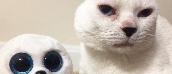 Foto: Internetā atrastais kurlais Otīts, kurš zaudējis abas austiņas