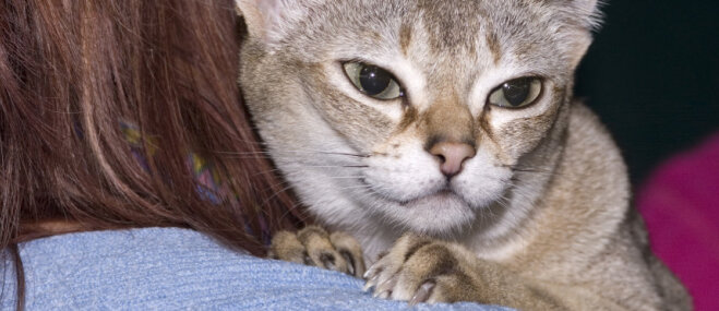 Piecas vismazākā izmēra kaķu šķirnes