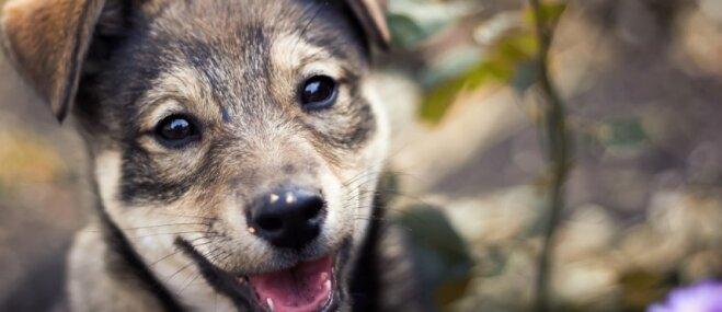 Nodzīvot ilgāk suņa dēļ: kā mājdzīvnieks uzlabo cilvēka dzīves kvalitāti
