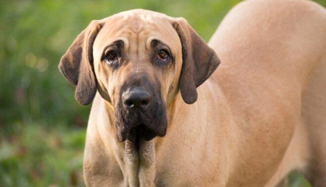 Первый раз услышите! 10 самых редких пород собак
