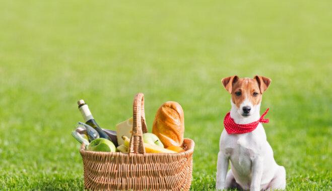 Шесть правил здорового пикника