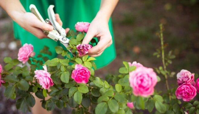 """""""Не будет у меня никакого огорода!"""": Восемь мифов про """"отсутствие сада"""", в которые надо перестать верить"""