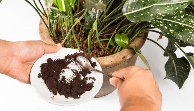 Как реанимировать комнатные растения