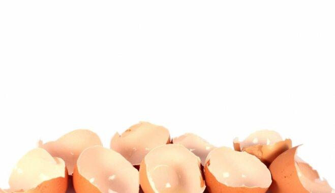 Яичная скорлупа как удобрение: как собирать и правильно использовать