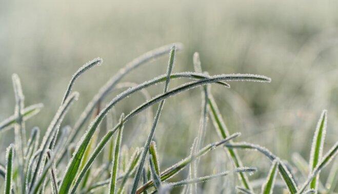 Весенние возвратные заморозки, их влияние на растения и действия садовода