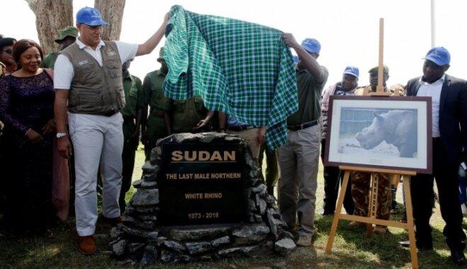 Aizkustinošā ceremonijā Kenijā atvadās no pasaulē pēdējā balto degunradžu tēviņa Sudāna