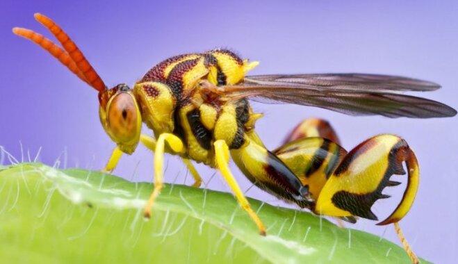 Biedējoši, bet skaisti: 30 kukaiņu ķermeņi tuvplānā