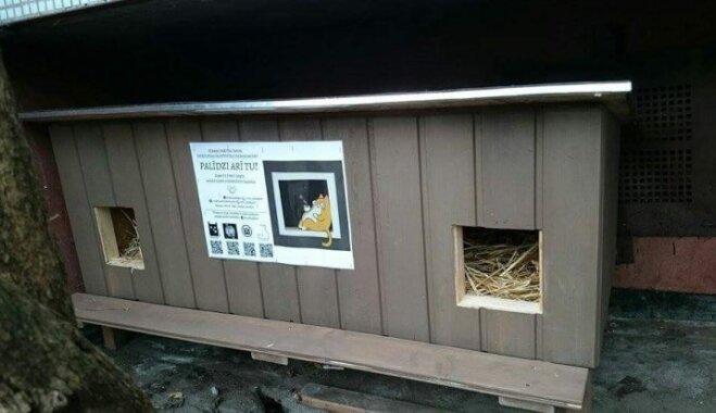 Pajumte 500 kaķīšiem. Dzīvnieku draugi uzstāda mājiņas, kuras demolē vietējie iedzīvotāji