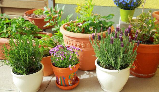 Video iedvesmai: kā mazos dārzos glīti un praktiski izvietot podus