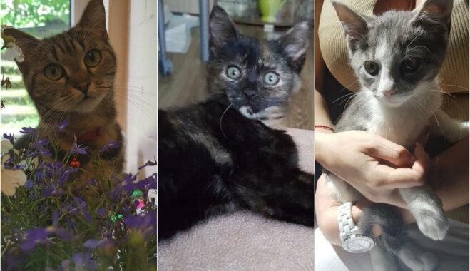 Patiesai laimei vajag tikai mīlošu saimnieku – mājas meklē pieci kaķi