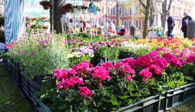 12. un 13. maijā Jelgavā notiks Latvijas Stādu dienas